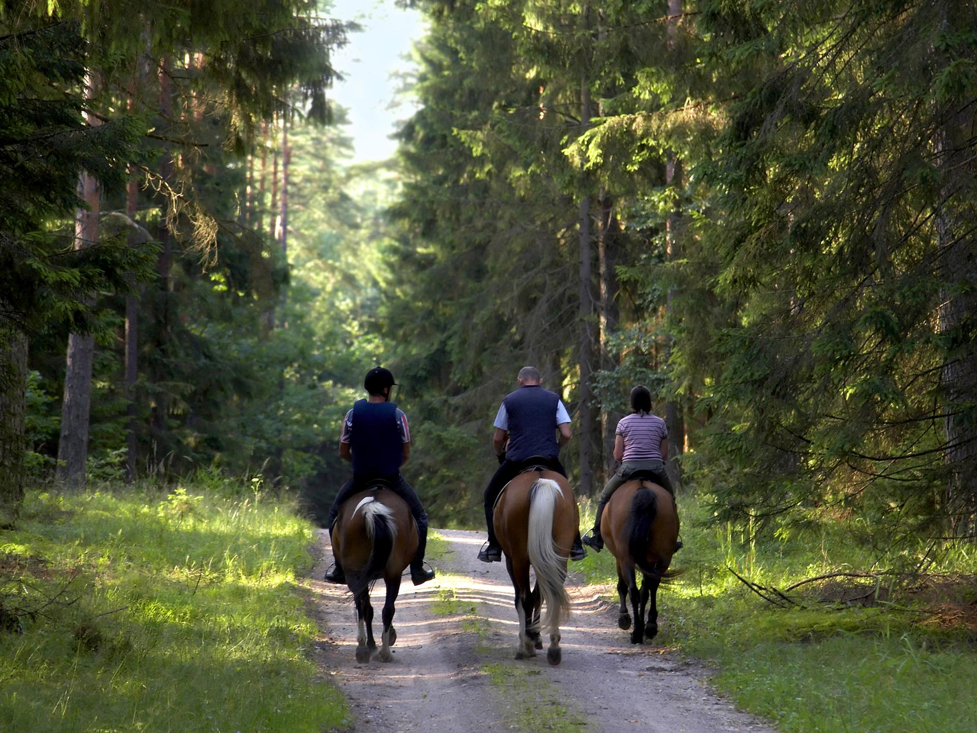 komarovo-forest-ride